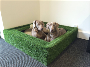indoor dog pit, lobby interior design ideas that didn't fly, sygrove associates, marilyn sygrove